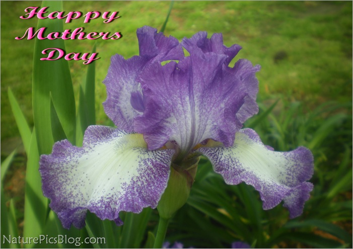 Happy Mothers Day 2012